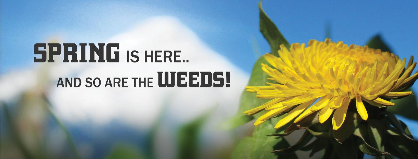 406 weed control slide 1